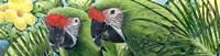 Military Macaws Fine-Art Print