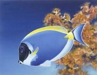 Powder Blue Tang Fine-Art Print