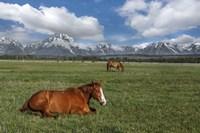 Teton Horses Fine-Art Print