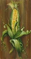 Ear of Corn Fine-Art Print