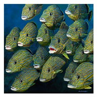 Shoal of Grunts Fine-Art Print