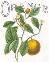 Classic Citrus VI Fine-Art Print