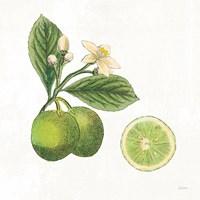 Classic Citrus III Fine-Art Print