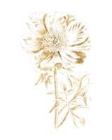 Gilded Botanical VIII Fine-Art Print