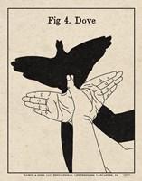 The Art of Shadows IV Fine-Art Print