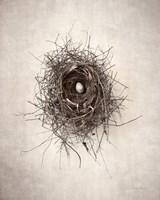 Nest I Fine-Art Print