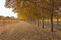 Autumn Rows Fine-Art Print