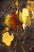 Autumn Leaves Fine-Art Print