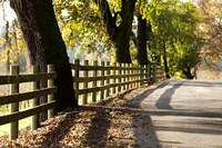Roadside Fence Fine-Art Print