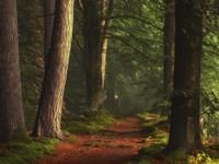 The Path To Galamdimaf Fine-Art Print