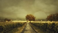 Through The Vineyard Fine-Art Print