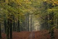 Middachter Forest 1 Fine-Art Print