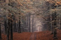 Middachter Forest 2 Fine-Art Print