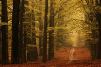 Middachter Forest 3 Fine-Art Print
