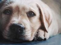 Dog's-Eye View Fine-Art Print