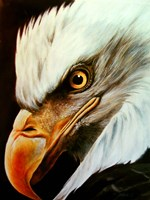 Eagle Eye Fine-Art Print
