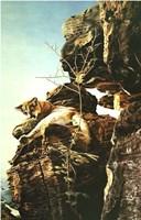 Warrior's Path Fine-Art Print