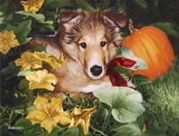 Pumpkin Farmer Fine-Art Print