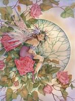 Morning  Rose Fine-Art Print