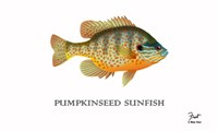 Pumpkinseed Sunfish Fine-Art Print