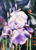 Dancing Iris Fine-Art Print