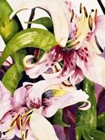 Luminous Lilies Fine-Art Print