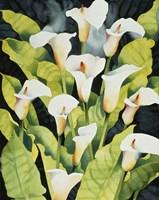 Midnight Callalilies Fine-Art Print