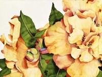 Orange Blossom Fine-Art Print