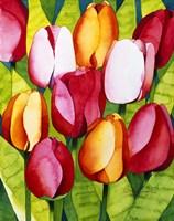 Tulip Time Fine-Art Print