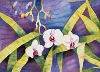 Water Orchids Fine-Art Print