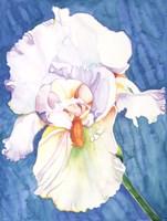White Iris Fine-Art Print