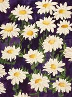 Shasta Daisies Fine-Art Print