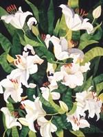 White Lilies Fine-Art Print