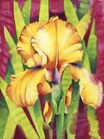 Yellow Iris W/ Maroon Back Fine-Art Print