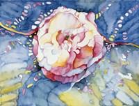 Essence Rose Fine-Art Print
