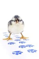 Chicks 4 Fine-Art Print