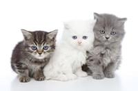 Kittens 6 Fine-Art Print