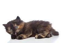Kittens 3 Fine-Art Print