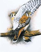 Elegant Raptor Fine-Art Print