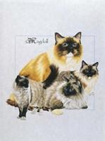Ragdoll Fine-Art Print