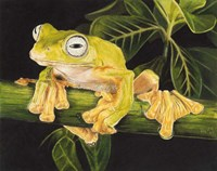 Musky Flying Frog Fine-Art Print