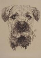 Border Terrier Fine-Art Print