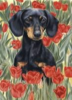 Dachsund In Tulips Fine-Art Print