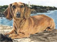 Dachshund In The Bay Fine-Art Print