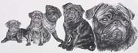 Growing Up Pug Fine-Art Print