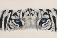 Eye-Catching White Tiger Fine-Art Print
