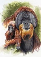 Orangutan Soul Fine-Art Print