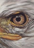 Eye-Catching Bald Eagle Fine-Art Print