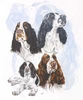 Springer Spaniel Fine-Art Print