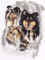 Collie Fine-Art Print